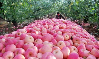 Red Moutain Apple